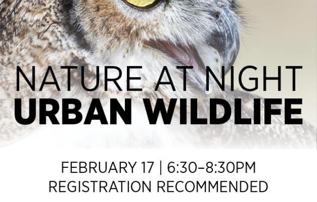 Nature at Night: Urban Wildlife