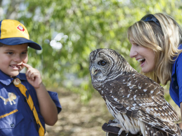 Migratory Bird Fest